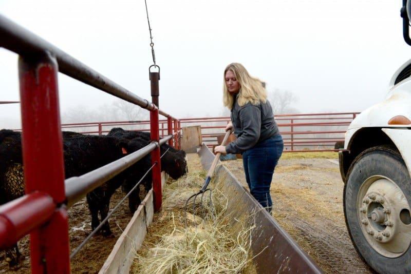 Bulk Buying Beef Feeding